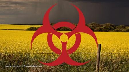 GMO Canola-Contamination-GreenInfoMedia